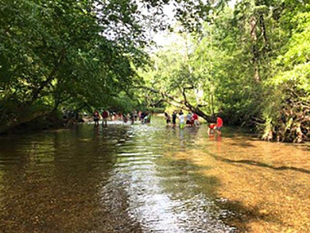 VL-SH-CES-Turkey-Creek.jpg