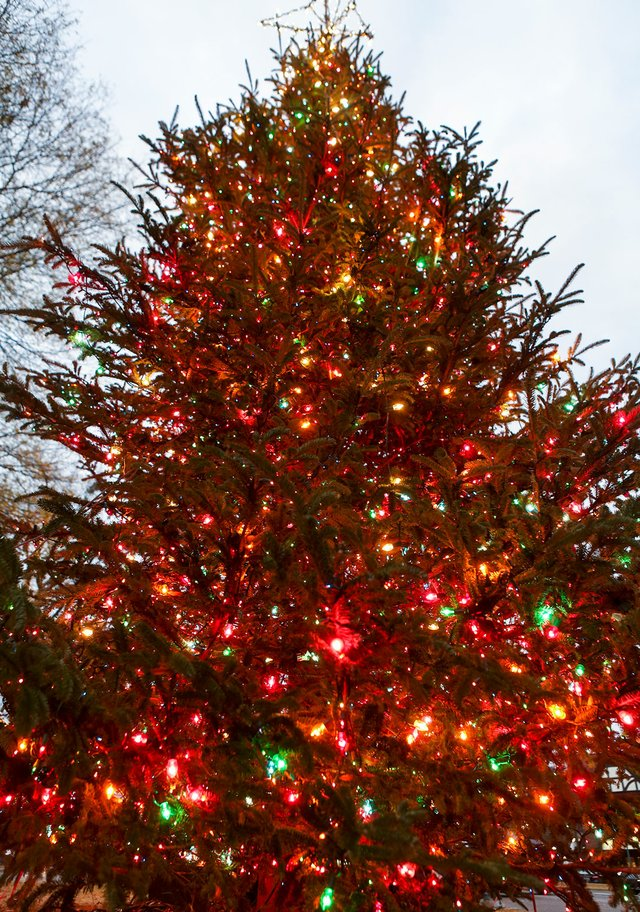 VL-EVENT-Bromberg-Tree.jpg