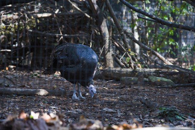 VL EVENTS TurkeyPardoning-3.jpg
