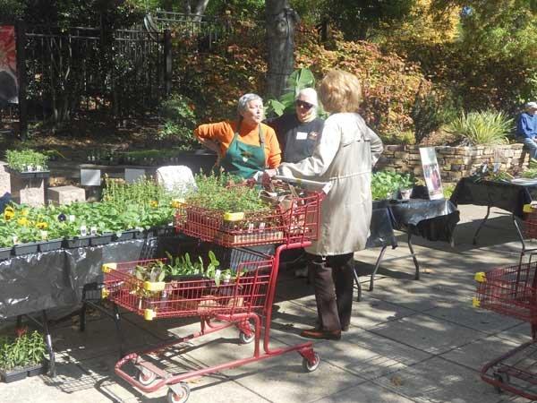 1013 Plant sale
