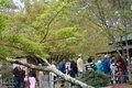 VL EVENTS cherry blossom festival16.jpg