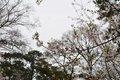 VL EVENTS cherry blossom festival21.jpg