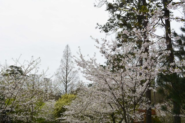 VL EVENTS cherry blossom festival5.jpg