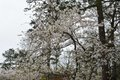 VL EVENTS cherry blossom festival7.jpg