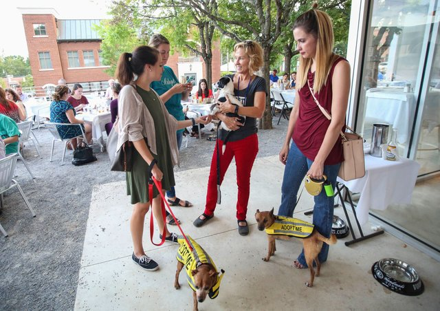 VL-EVENTS-Pooches-on-the-Patio.jpg