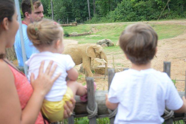 VL COMM Brief Birmingham Zoo's education program recognized with national award.jpg