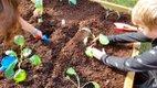 VL-FEAT-AWF-@-Brookwood_ANC_childen-planting.jpg