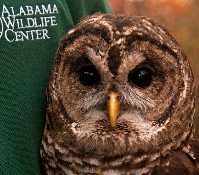 EVENT---Owl-O-Ween.jpg