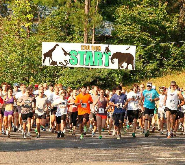 Zoo Run 2013