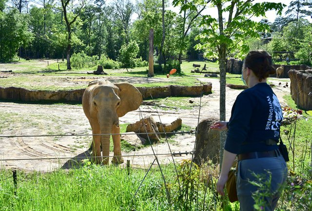 VL-COMM-Bham-Zoo-EN07.jpg