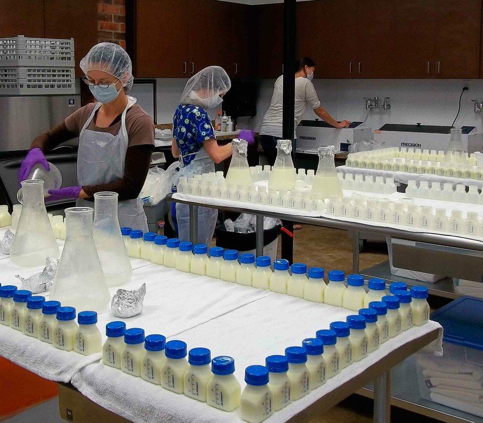 Milk Chocolate Lab Truffle 18-pc