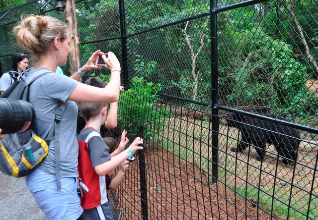 Black Bear Exhibit Zoo