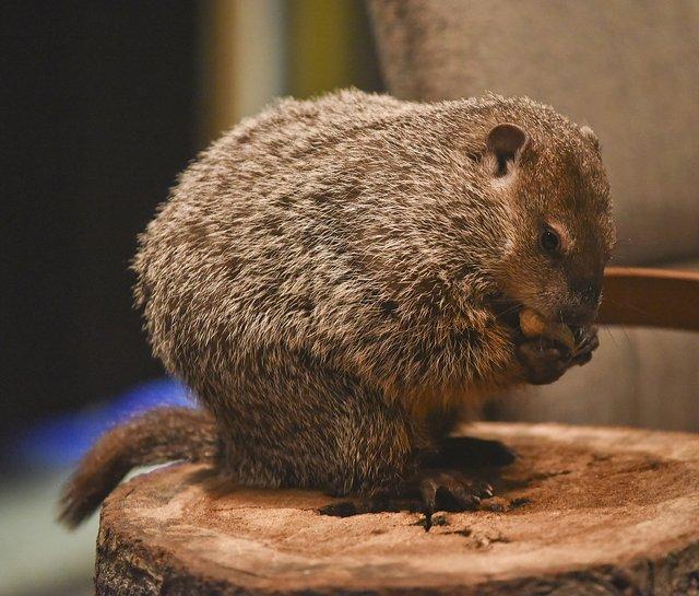 Web Groundhog Day38.JPG