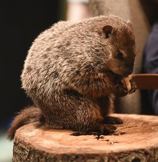 Web Groundhog Day39.JPG