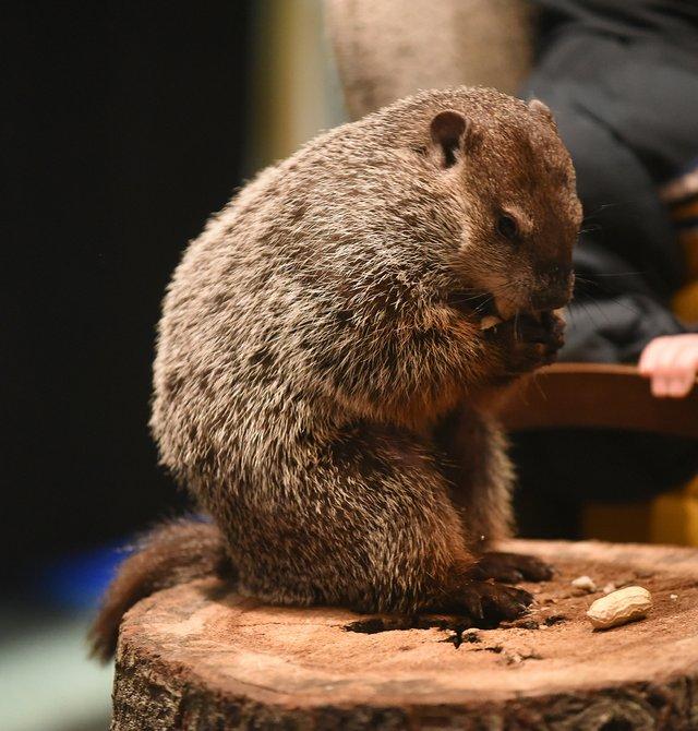 Web Groundhog Day40.JPG