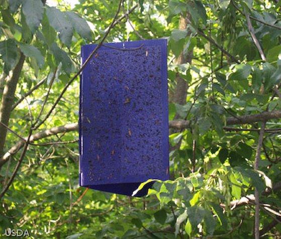 VL VV 280 Invasive Pest 2.jpg
