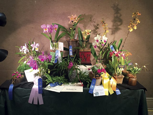 VL-EVENT-Orchid-Show2.jpg