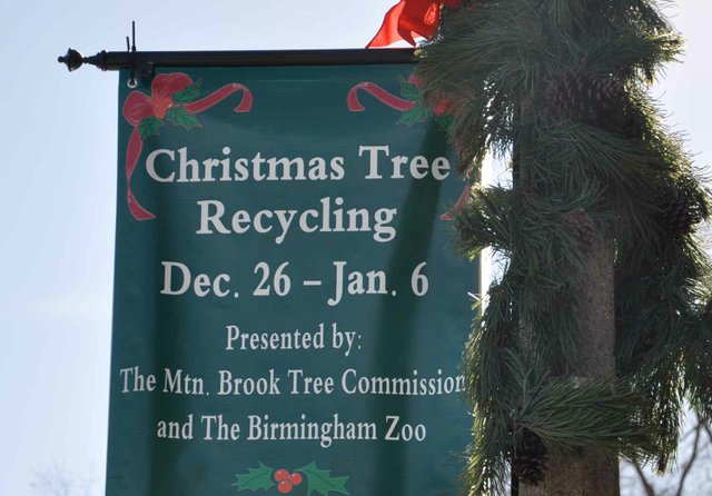 1212 Tree recycling