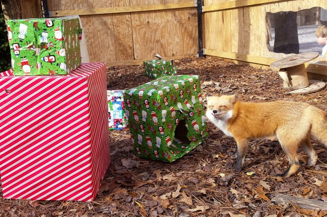 VL-COMM-Zoo-Animal-Gifts.jpg