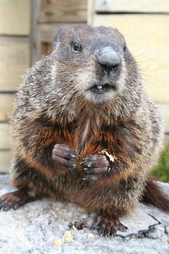 0213 Groundhog