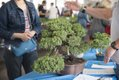VL EVENTS SpringPlantSale-2.jpg